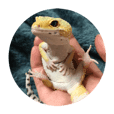 Reptile of my home