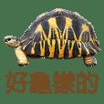 烏龜說...