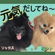 【ヒナちゃんの友達】ワンコ沢山2