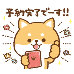 Appointment!Shiba Inu to use everyday09