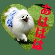 白ぽめ♡しゅりりんこスタンプ.3