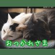 平井家のねこ 第2弾