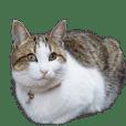 動く! リアル猫さんスタンプ 3
