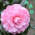 拈花惹草 - 12【中文版】