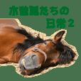 木曽馬たちの日常2