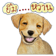Doggie Talks
