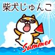 柴犬じゅんこの夏