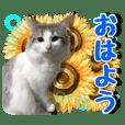 しずく&北斗★4[夏]
