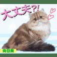 ヒナちゃんシリーズ【番外編】