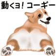 Move! sticker of Welsh Corgi