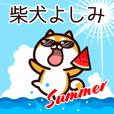 柴犬よしみの夏