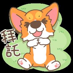 柯基犬椪椪愛亂動!
