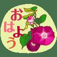綺麗な花を贈ります 6 【夏】