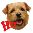 Norfolk Terrier family -Members-