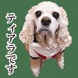 """アメリカンコッカー""""ティアラ""""のスタンプ2"""