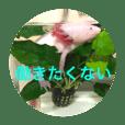 谷川家のうぱさん2(ウーパールーパー)