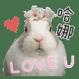 Bunny-Hana