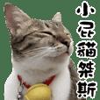 Naughty kitten jaze
