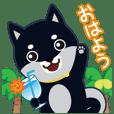 """Shiba dog """"MUSASHI"""" 19 KOJIROU"""