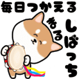 Cute maruShiba Inu