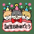 柴犬の誕生日&お祝い&ありがとう