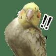 笨鳥生活日常-01