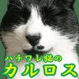 ハチワレ猫のカルロスの日常