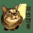 Petopia Cat Life Sticker