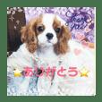 キャバリア犬の赤ちゃんスタンプPart3