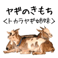 ヤギのきもち【姉妹の日常】吉懸牧場2
