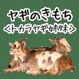 Goat Yoshigake Farm 2