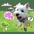 Qiao Qiao's daily life