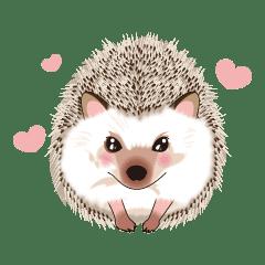 lovely hedgehog!!