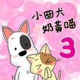 A funny dog and a funny cat 03