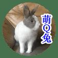 Meng Q Rabbit Family