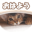 KARIMO'S KITTY STAMPS ABYSSINIAN 1
