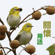 Greetings- Japanese white-eye