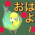 インコのポンちゃん(日常会話)