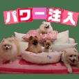 ヒナちゃんFriend 【愉快な仲間たち】