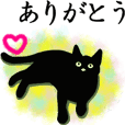 Simple black cats -daily use-