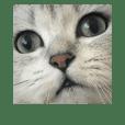 Lavi Meow