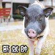 Jenny's pigs baby