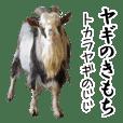 ヤギのきもち【じじの日常】吉懸牧場3