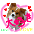 Stamp for the cute pet dog Papillon