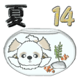 Shih Tzu dog (summer season 2) vol.14