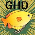 Golden Honey Dwarf Grammy