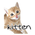 Kitten's . photo stamp. KONEKO