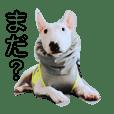 Bull Terrier botan