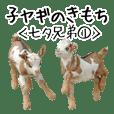 子ヤギのきもち【七夕兄弟1】吉懸牧場4
