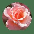 綺麗なお花のスタンプ